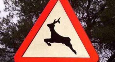 señalización peligro animales sueltos
